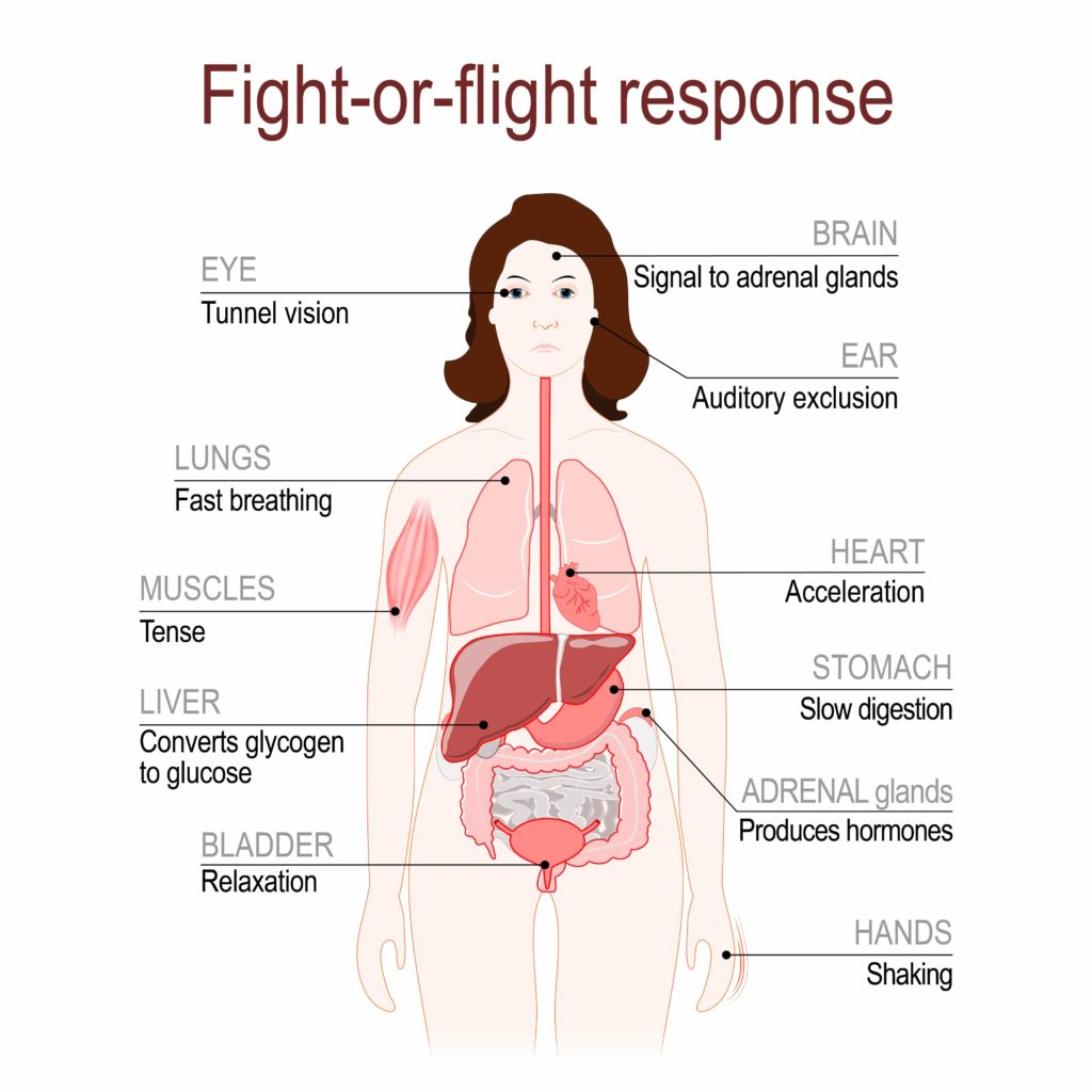 fight or flight diagram